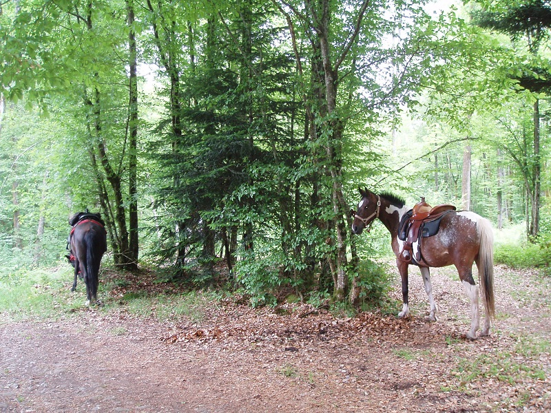 Le Creux camping paardrijden Vogezen