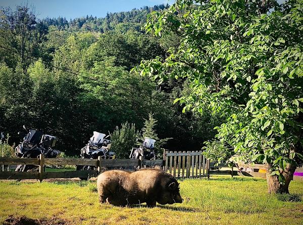 motor camping Le Creux zuid Vogezen